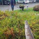 jardinería temuco